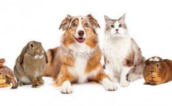 5 Jenis Hewan Peliharaan yang Bikin Kamu Beda