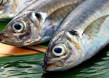Mau Makin Sehat dan Hits? Ayo Makan Ikan Ini!