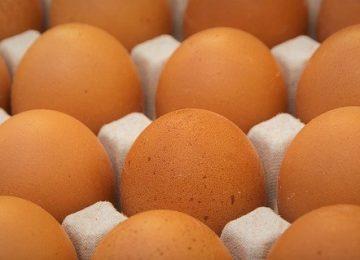 Telur: Baik atau Buruk?