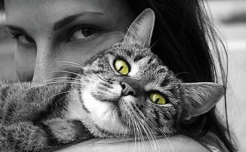 Kucing Bisa Sebabkan Tokso? Cek Kebenarannya di Sini!