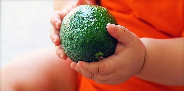 avocado-1476494_640
