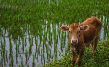 Ubah Masa Depan dengan Pembangunan Pertanian dan Ketahanan Pangan