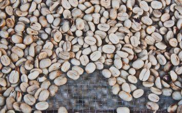 Green Coffee bisa Menurunkan Berat Badan, Benar Ngga ya?