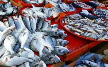 4 Ikan Padat Gizi yang Mudah Ditemui!