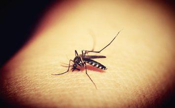 6 Alasan yang Membuat Kamu sering Digigit Nyamuk