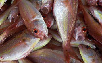 Tips Memilih Ikan Segar