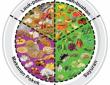 Tips Pangan dan Gizi untuk Meningkatkan Imunitas Tubuh