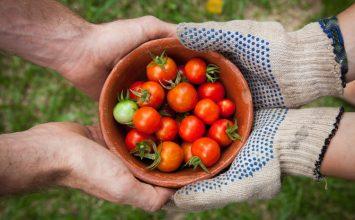 Inilah Cara Menghilangkan Stres dengan Berkebun!
