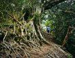 Hutan Indonesia, Paru-Paru Dunia yang Menyehatkan Fisik dan Mental