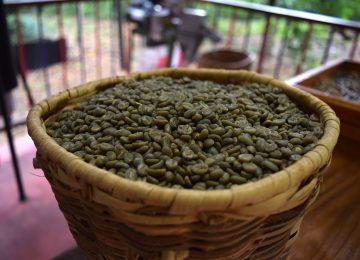 Manfaat Konsumsi Green Coffee, Bisa untuk Diet?